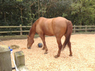 equestrian_c